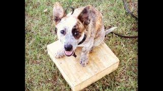 Inola Oklahoma Dog Training - Lexi