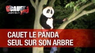 Cauet le panda reste perché seul en haut de son arbre - C