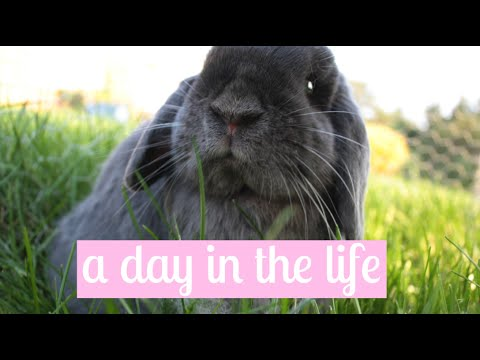 A Day in The Life of Paisley The Bunny || 2015 Montage