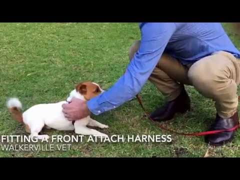 Front Attach Harness for Leash Pulling Dog