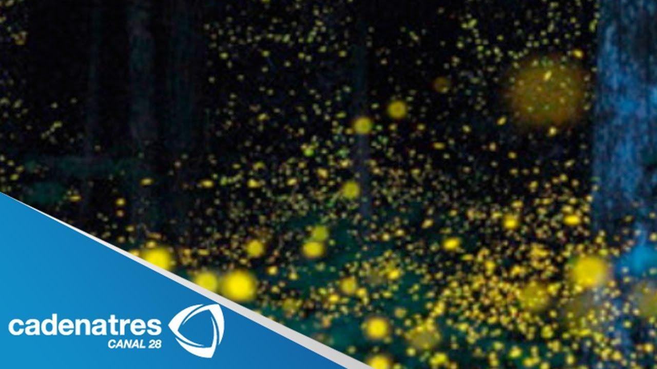 Santuario de luci rnagas de tlaxcala ofrece un espect culo Espectaculo de luciernagas en tlaxcala