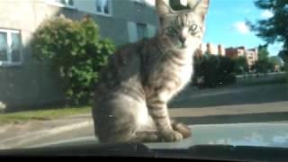 FUNNY CAT!!! ANIMALS