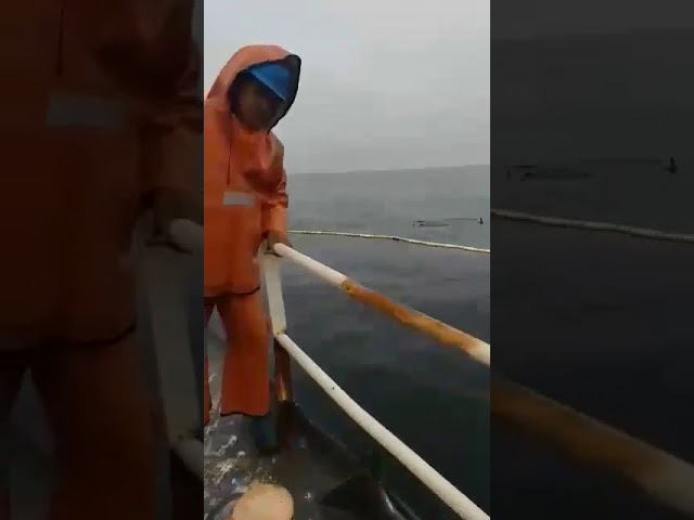 """Captura de 300 toneladas de Anchoveta en un solo lance, originando que se """"corte"""" la red..."""