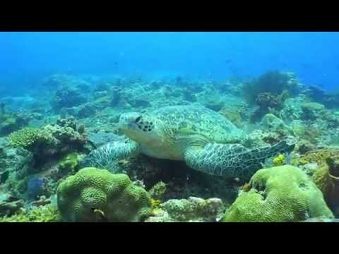 Marinelife on Mabul and Sipadan island, Sabah, Malaysia