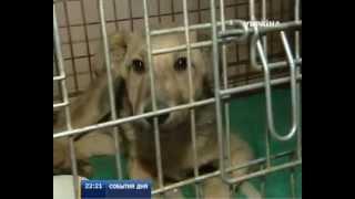 Бездомные собаки в Донецке получили новый дом