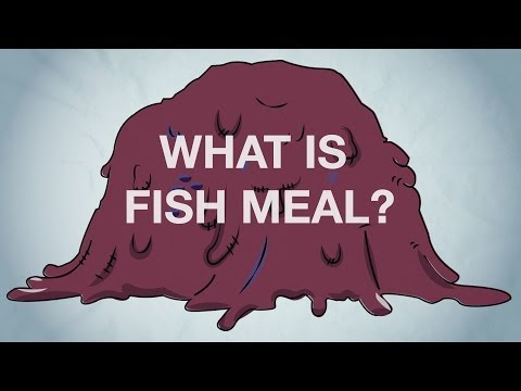 What Is Fish Meal?