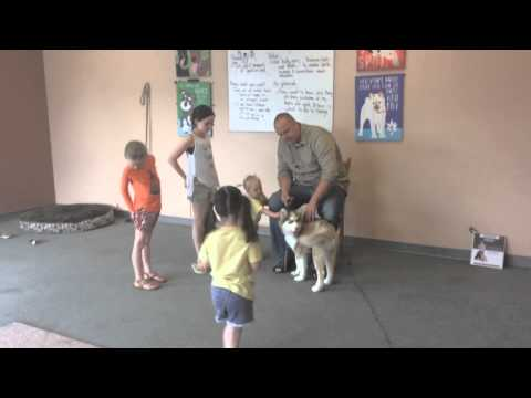 how-to-train-a-dog-to-stop-biting,-nipping,-and-mouthing