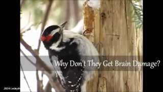 Woodpeckers Pt.1 - Why They Don