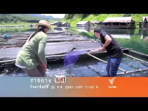 Foodwork :  เมนูจากปลาคังสดๆ เนื้อแน่นๆ (21 ก.ย.57)