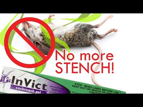 How To Poison Rats Without The Stench | Kills Roaches & Ants Too
