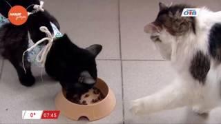 Наше УТРО на ОТВ – пушистое утро о том, чем кормить котов