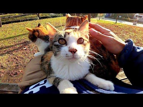 子猫をナデナデしたら膝の上に乗ってきたと思ったら次々と猫がやって来た