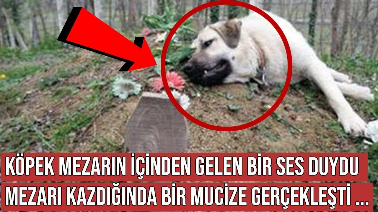 Köpek Sahibinin Mezarını Kazmaya Başladı, Sonra Bakın Ne Oldu