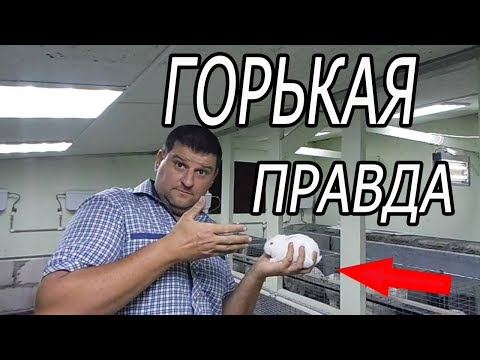 ГЛАВНЫЕ МИФЫ В КРОЛИКОВОДСТВЕ!