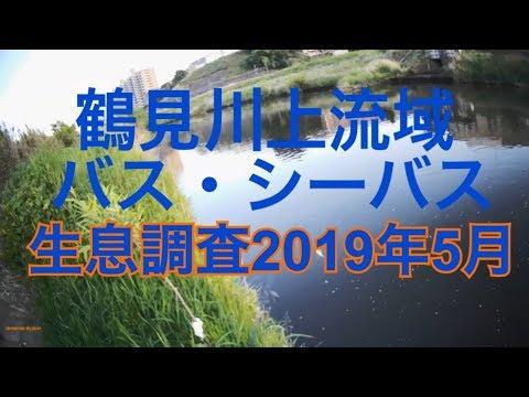 鶴見 川 シーバス