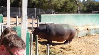Safari Zoo Mallorca - Flusspferde