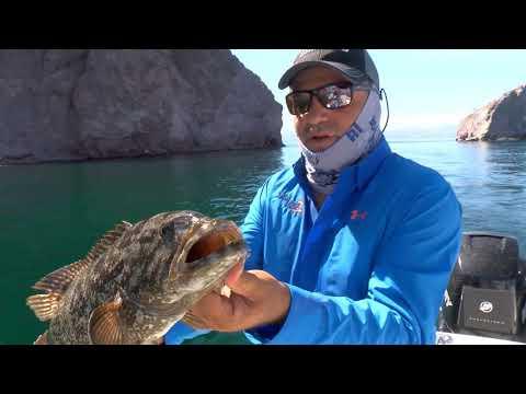 Season 3 | Episode 11 | Sea Of Cortez Grouper 311