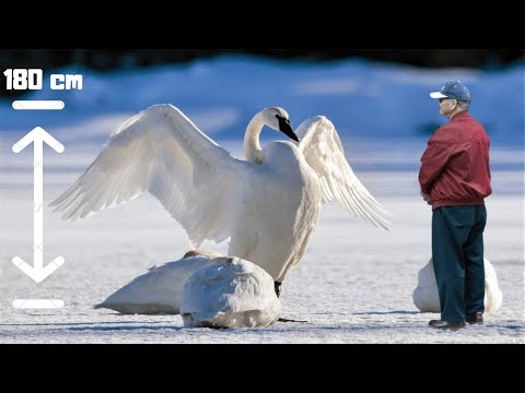 Largest Birds Of Their Genus on Planet Earth