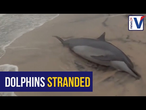 WATCH: Dineo leaves dolphins stranded on Mozambique beach