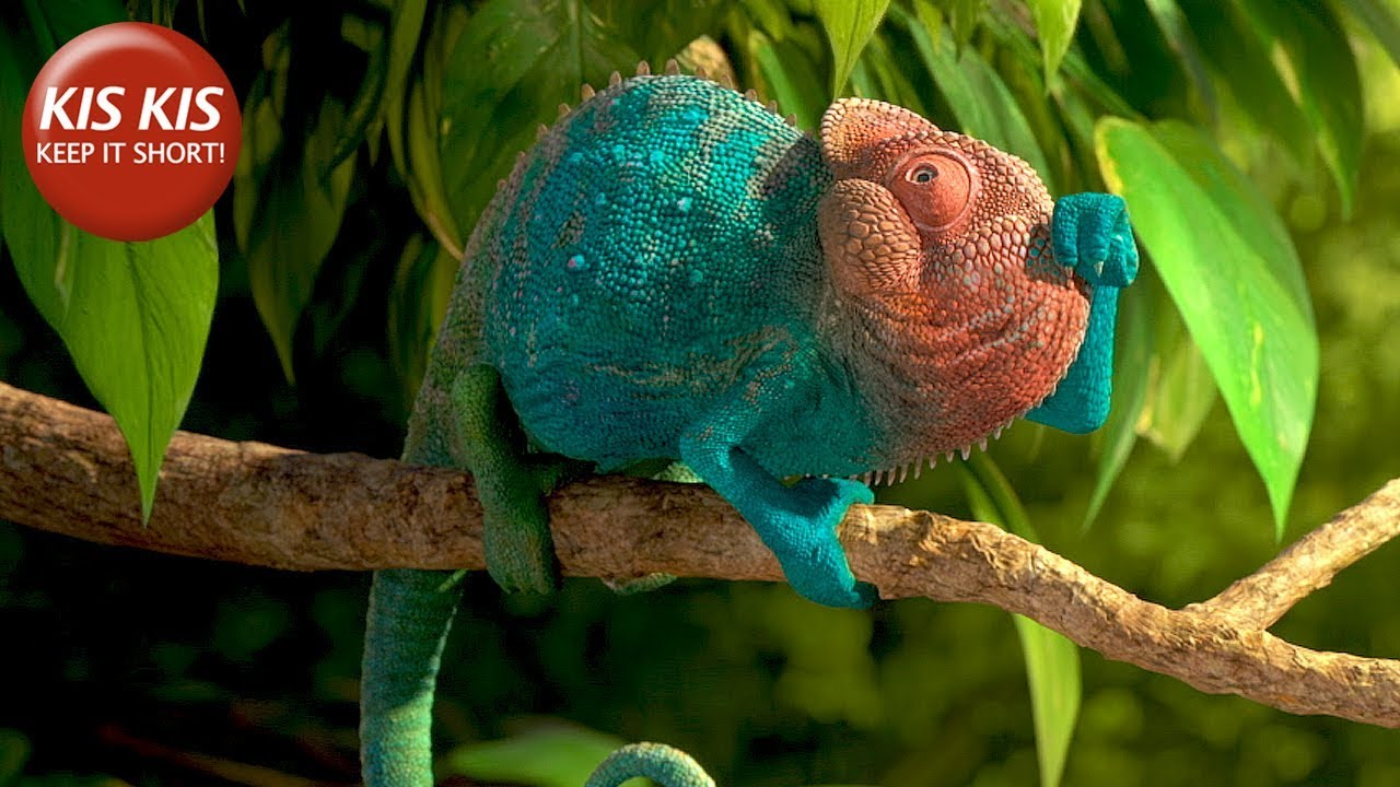 """Download CG Short film """"Our Wonderful Nature: The Common Chameleon"""" - by Tomer Eshed"""