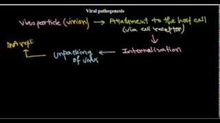 5  Viral pathogenesis introduction