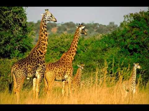 Travel to : Rwanda !!!