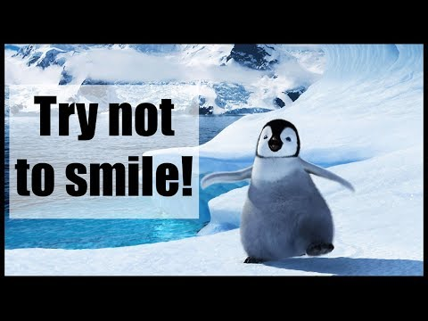 Funny and Cute Penguin Video Compilation | Try not to smile 2018 ( Winter edition )