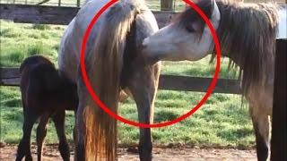 vuclip هل تعلم  لماذا يجب عليك قتل الحصان ؟