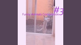 Funny Animals #3