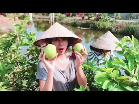 Lý Hải Minh Hà hái trái cây ở miền Tây | Lý Hải Minh Hà Family