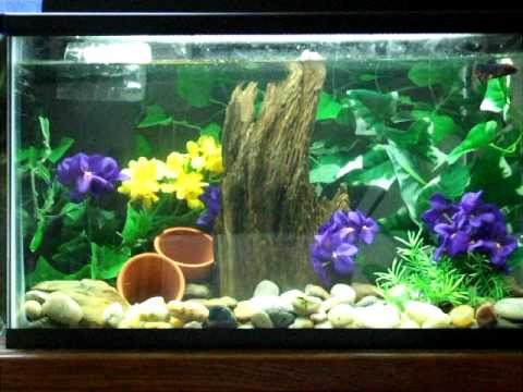 10 gallon betta fish tank -