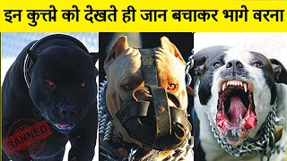 10 Most Dangerous Dog In The World | Most Dangerous Dog Breeds | Most Aggressive Dog Breeds in Hindi