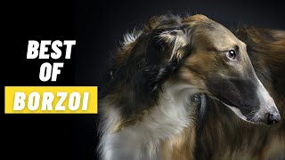 BEST OF BORZOI  THE RUSSIAN WOLFHOUND