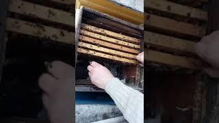 Пчелы! Сильная влага в клубе!семья выжила! Не было вентиляции