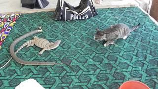 SAND VIPER - EFA (Echic) vs. CAT HOME