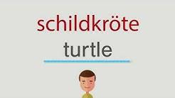 Wie heißt schildkröte auf englisch
