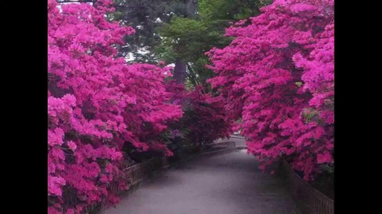 Paisajes japoneses youtube - Fotos jardines japoneses ...