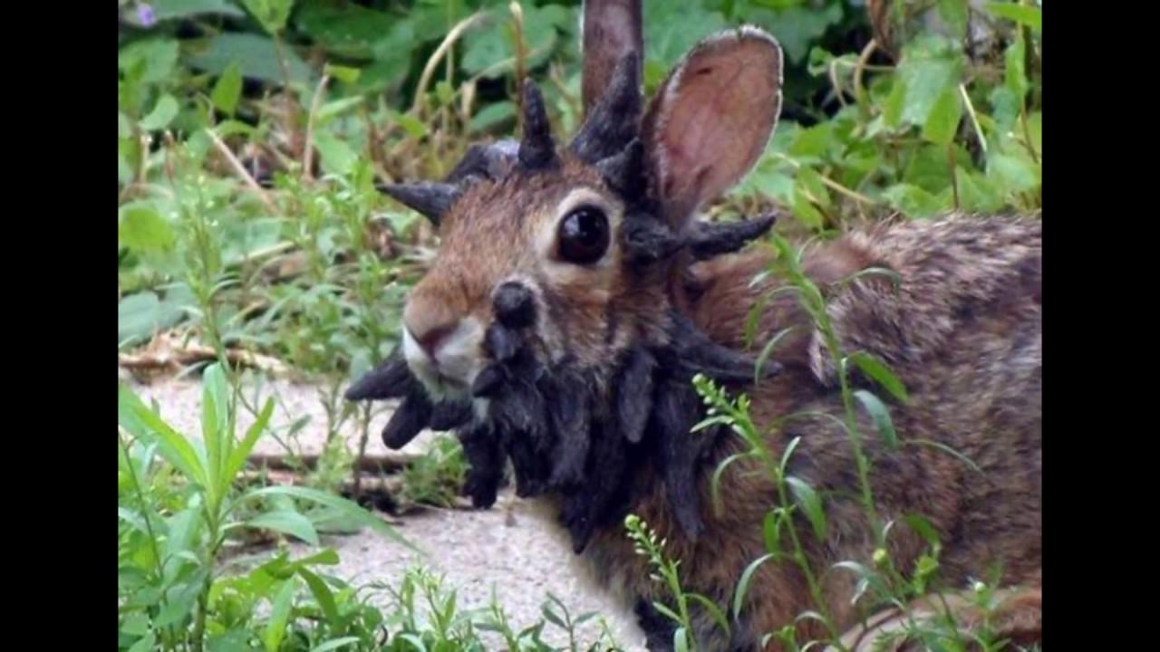 Объявления о продаже декоративных и карликовых кроликов в красноярске на avito.