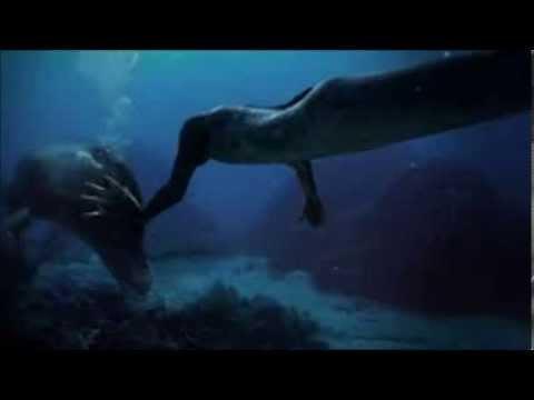 Real Mermaid Caught on Camera in 2014!? REAL MERMAID ...