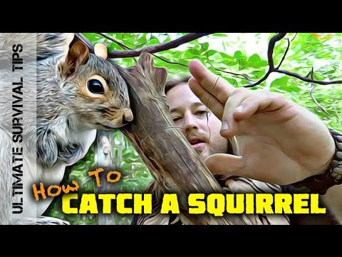 SURVIVAL MEAT! Squirrel Pole Snare Set-Up - SURVIVAL TRAPS / SNARES 101
