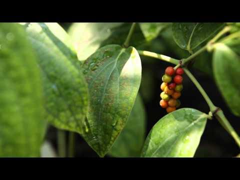 La serra tropicale del giardino della biodiversit youtube - Giardino tropicale ...