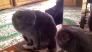 Кошка орет сама на себя