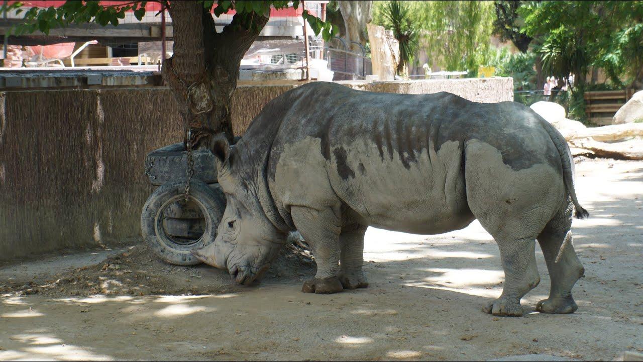 Zoo Barcelona barcelona zoo