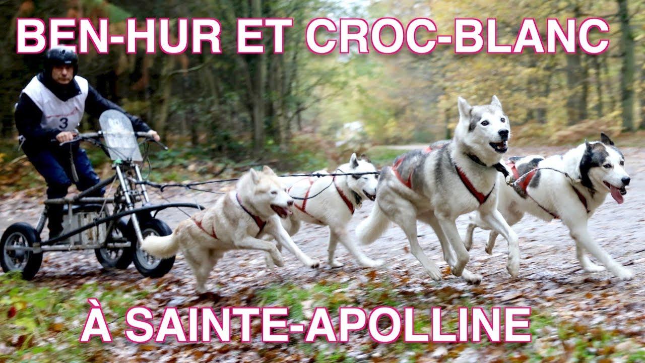 Une course de traineaux à chiens dans les Yvelines