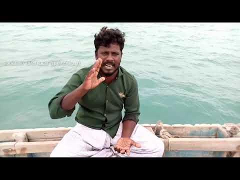 முத்து குளிப்பது எப்படி/How to do pearl fishery (pearl fishing)