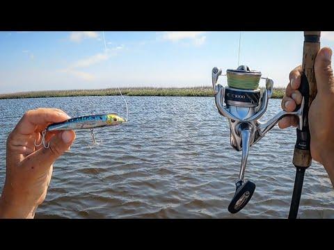 TOPWATER & Jerkbaits - Spring Backwater Fishing!