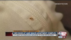 Bed bugs at Lake Wales apartment complex