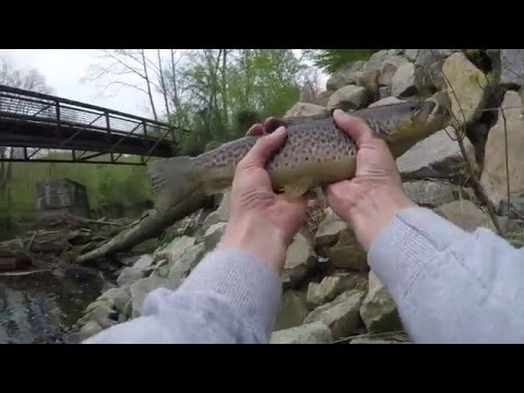 Stocked Trout Fishing at White Clay Creek (Newark, DE)