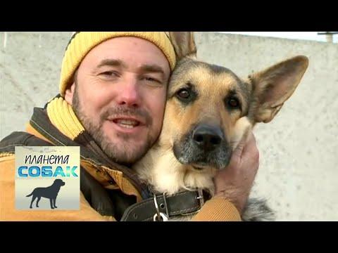 Восточноевропейская овчарка. Планета собак 🌏 Моя Планета