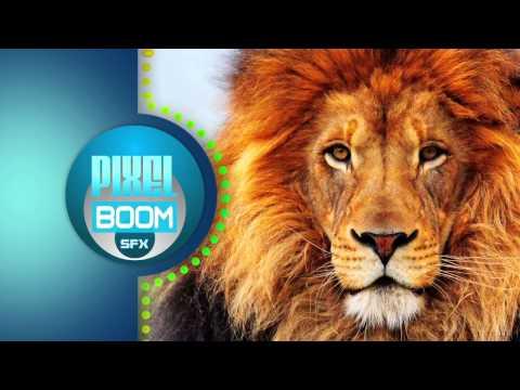 Sound Effects - Lion ROAR - CC A 3.0 - PixelBoom SFX